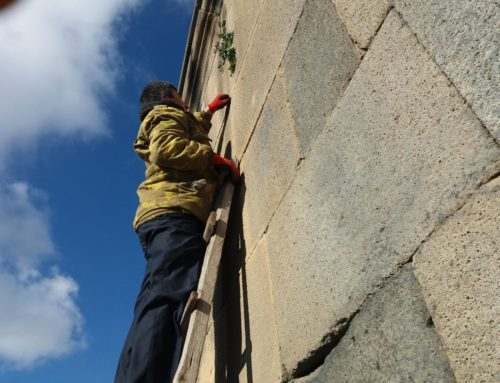 EIGHT MONUMENTS IN SHIRAK REGION AND 10 MONUMENTS IN ARAGATSOTN HAVE BEEN CLEANED FROM VEGETATION